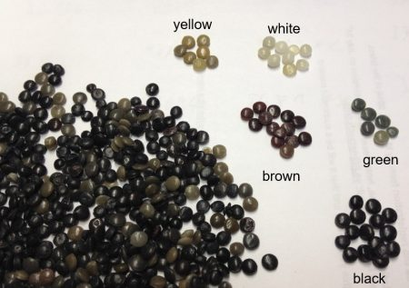 Recycled PP granulate
